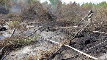 Число природных пожаров в Подмосковье в 2011 году сократилось в 4 раза