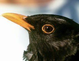 Эксперт не считает экстраординарными последние случаи гибели птиц