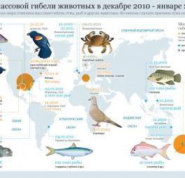 Мировая карта мест массовой гибели животных в декабре 2010 - январе 2011 гг.