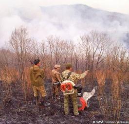 Пожары на Земле Леопарда: одни безнаказанно поджигают, другие героически тушат