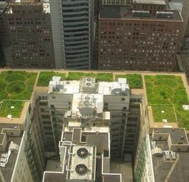 Зеленые крыши городов спасут климат