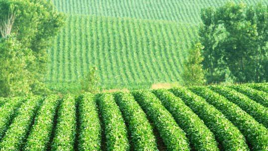 Аргументы против ГМО (и промышленного сельского хозяйства)