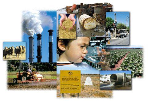 Формирование системы экологической адаптации в условиях современной окружающей среды