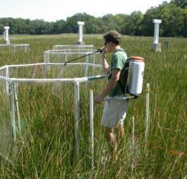 Влияние уровня азота в почве на растения и экосистемы