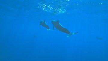 Китовое радио в интернете поможет расшифровать речь китов
