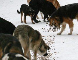 Мэрия Москвы выделит 780 млн рублей на бездомных животных в 2011 году