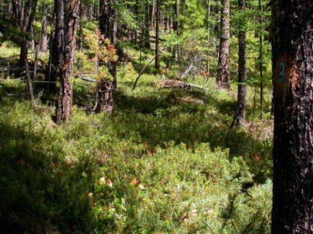 видов,процентов,биоразнообразия,обитания,утраты