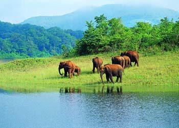 Воздействие глобализации на экотуризм