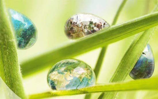 Программа ООН по защите природы: Глобальная перспектива в области биоразнообразия