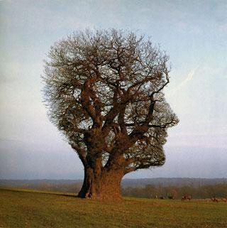 Психология среды как контекст проблемы самореализации личности