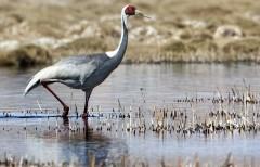 Видеокамеры для наблюдения за редкими птицами появятся в Хинганском заповеднике