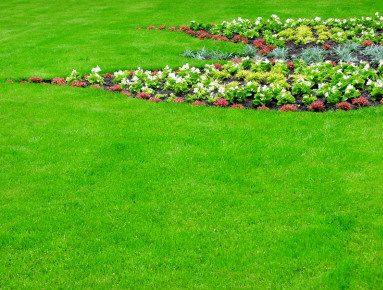 В Вашингтоне появляются зеленые захоронения