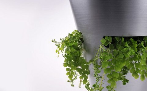Зеленый мусорный бак с компостом