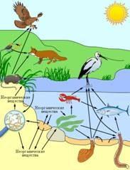 Биотические факторы среды и  типы взаимоотношений организмов