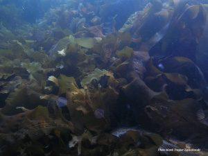Китобойный промысел приведет к исчезновению водорослевых лугов?