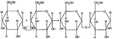Углеводы: общая характеристика