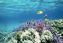 Почти 19 процентов коралловых рифов находятся на грани исчезновения