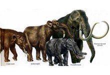 Эволюция животного мира станет заметной через несколько поколений