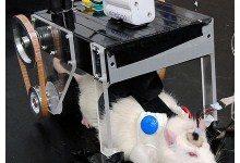 Крысомобиль - новая разработка Токийских ученых