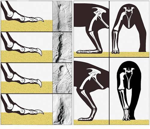 Как оживают кости ящеров?