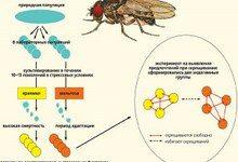 Выбор брачного партнера у животных зависит от бактерий