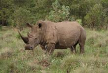 Каждый четвертый вид млекопитающих может исчезнуть