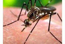 Американские ученые создали вакцину от лихорадки чикунгунья