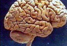 Уставший мозг впадает в спячку среди бела дня
