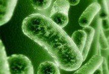 Бактерии дадут людям возможность дожить до 140 лет