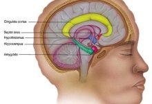 Ученые определили главный белок отвечающий за процесс запоминания