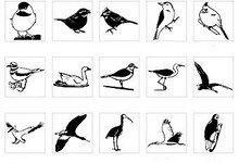 Ученые переписали эволюцию птиц